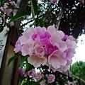 南京路站拱頂上的蒜香藤花