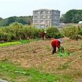 整理農地的村婦