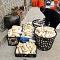 馬祖白蘿蔔豐收成堆