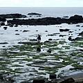 台26線73.5公里處,孤獨漁人身影