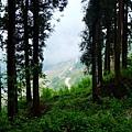 樹林間隙中的屏遮那大斷崖風景
