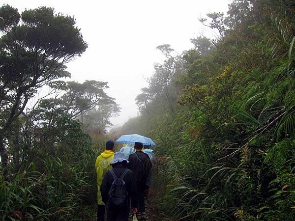 山中小徑瀰漫雨霧之中