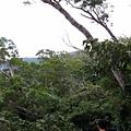 浸水營古道風景
