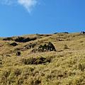 仰望山坡一片蒼綠