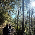 玉山步道沿途風景