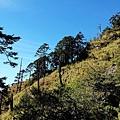 攀登玉山前峰沿途風景