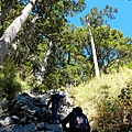 石瀑旁巨木聳立