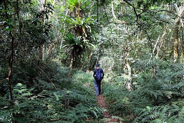 進入山中樹林更叢密之處