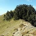 稜線步道進入樹林