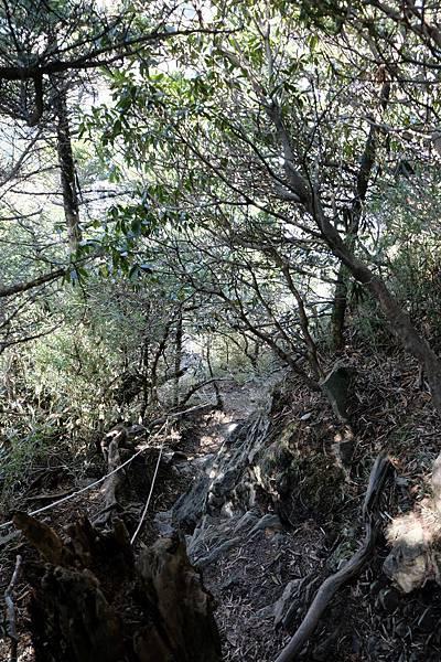 樹林步道3.4K陡下