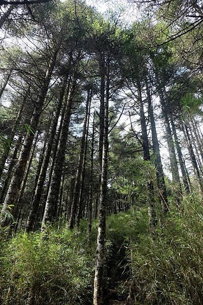 再度進入樹林