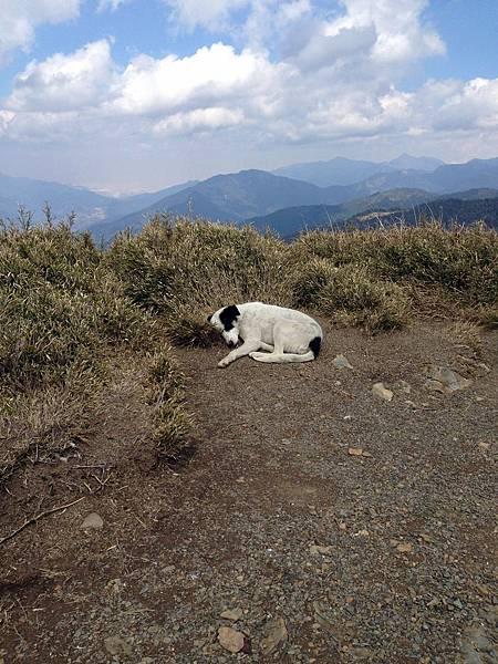 崇山峻嶺中的睡覺小狗