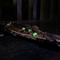 發光小菇,長曝補光攝影