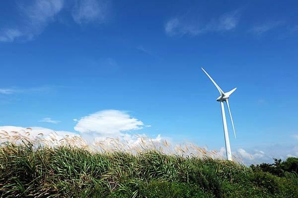 藍天、白雲、綠草、金芒、大風車