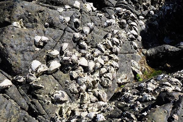 岩石上有貝類附著