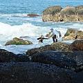 當地漁民在海浪礁石之間