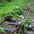 鐵軌上長滿綠草