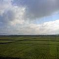 綠油油的田地