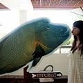 與實際大小相符的蘇眉魚合影