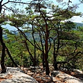 岩縫有松樹生長