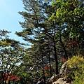 登山客休息林間