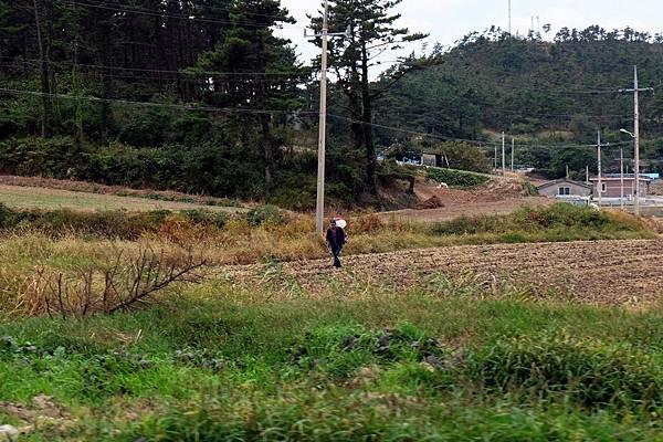田裡工作的農民