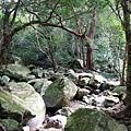 山林河床巨石散布