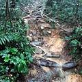 大雨中的陡上山徑