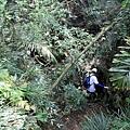 大猴洞出口前往九龍榕的未知之旅