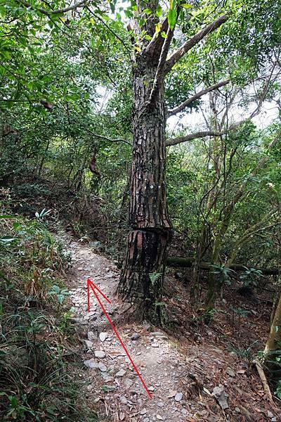 遇刻記號之樹