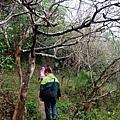 穿越枯枝林