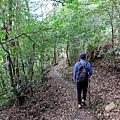 進入密林步道
