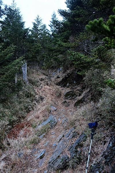 步道小徑開始往上爬坡