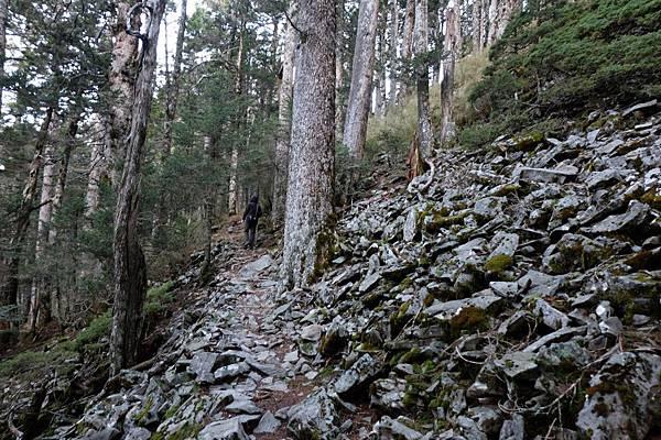 玉山西峰步道一景