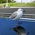 博物館前的水流裝置藝術,停了幾隻大海鳥,感覺非常愜意