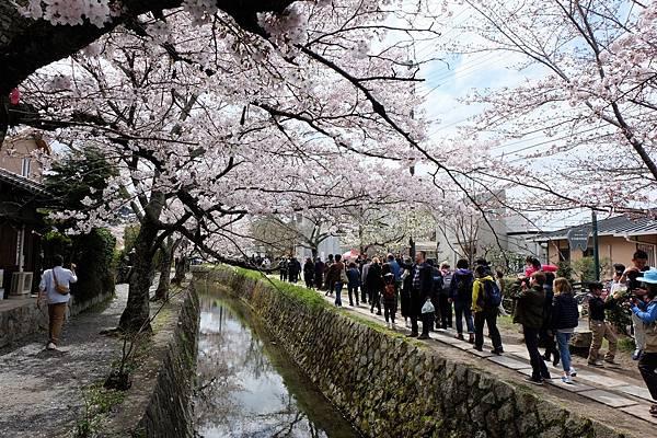 哲學之道-琵琶湖疏水道
