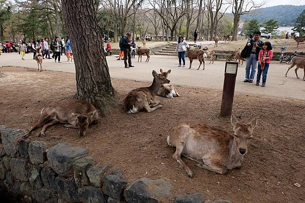 自由自在的小鹿