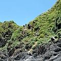 從陡崖上往下攀爬路線