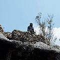 假山上的石猴