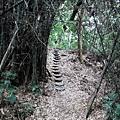 竹林中的輪胎階梯