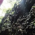 盤龍木生長崖壁