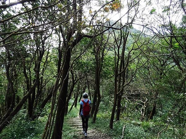 經過筆筒樹林