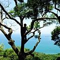 相思台攀相思樹