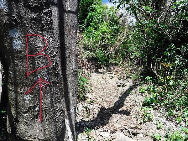 樹幹上依稀殘存B↑記號