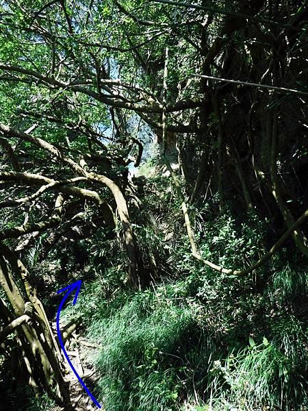 繞過第二棵榕樹後方