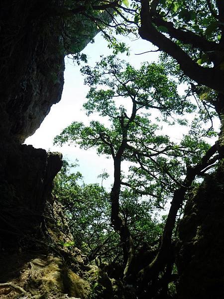 山壁之間的樹影
