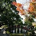 太鼓橋、心字池楓葉紅綠景緻