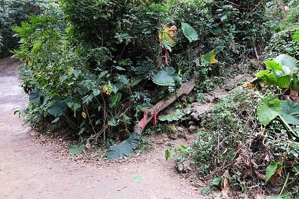 前往大崗山減肥洞的山徑入口
