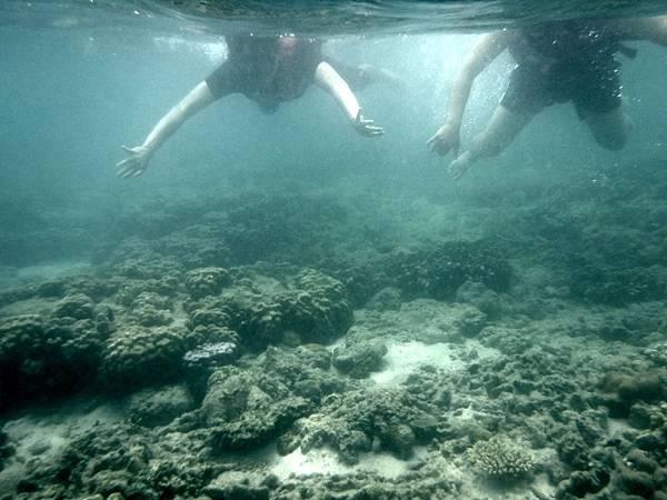 體驗迪加島浮潛