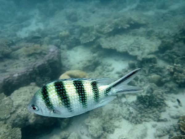 水下的熱帶魚
